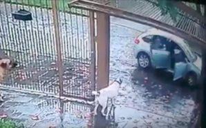 VIDEO: Perros salvan a su dueño de ser secuestrado